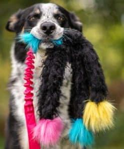 Doggie-Zen Elastisk Bläckfiskkampis