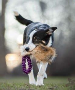 Doggie-Zen Elastisk Fickkampis Räv
